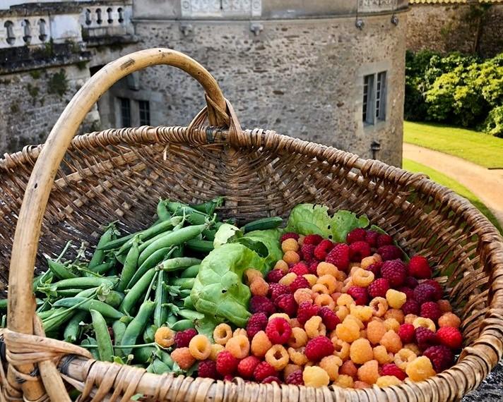 Panier de fruits à confiture au Château du Lude